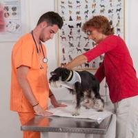 Practicas-Curso-Auxiliar-Veterinaria-09