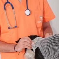 Practicas-Curso-Auxiliar-Veterinaria-12