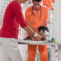 Practicas-Curso-Auxiliar-Veterinaria-29