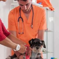 Practicas-Curso-Auxiliar-Veterinaria-30