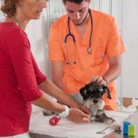 Practicas-Curso-Auxiliar-Veterinaria-33