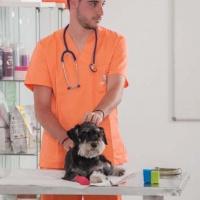 Practicas-Curso-Auxiliar-Veterinaria-42