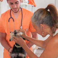 Practicas-Curso-Auxiliar-Veterinaria-52
