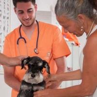 Practicas-Curso-Auxiliar-Veterinaria-54