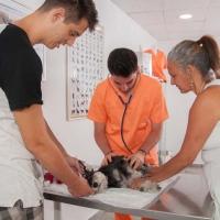Practicas-Curso-Auxiliar-Veterinaria-56