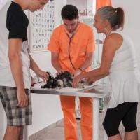Practicas-Curso-Auxiliar-Veterinaria-60