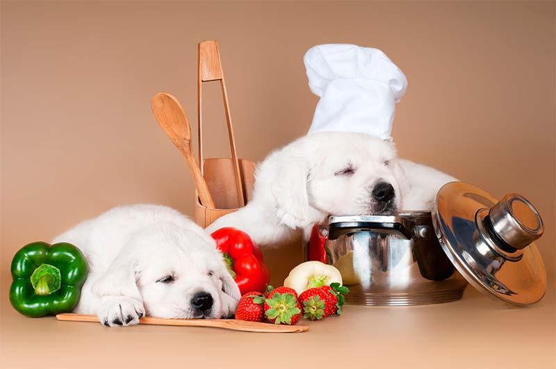 Alimentos permitidos para tu perro - TOP aul@ Salud