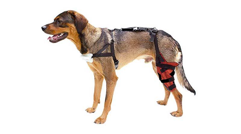 Ortopedia canina - TOP aul@ Salud
