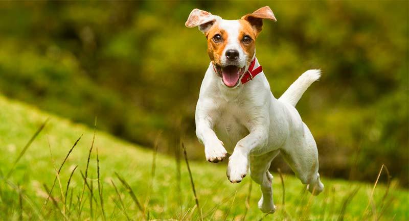 Proteger las articulaciones de nuestras mascotas - TOP aul@ Salud