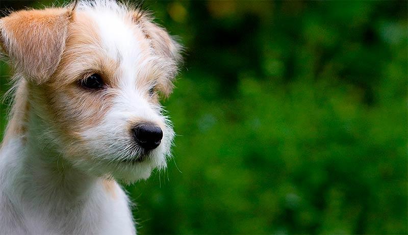 ¿Cómo proteger a tu mascota de las plagas del verano?