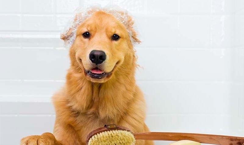 5 Consejos para el aseo de tu mascota - TOP aul@ Salud