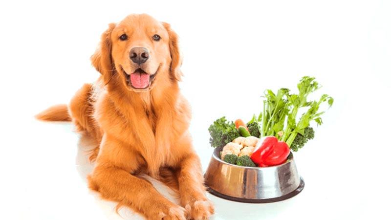 6 Consejos para elegir el mejor pienso para tu perro - TOP aul@ Salud