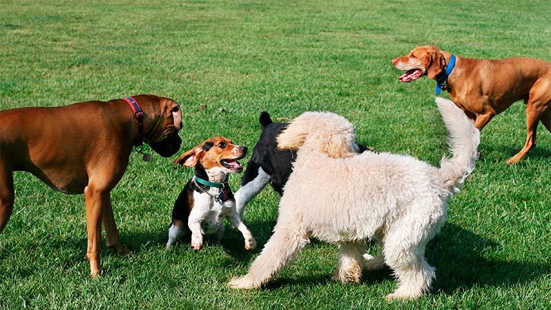 ¿Cómo socializar a tu perro? - TOP aul@ Salud