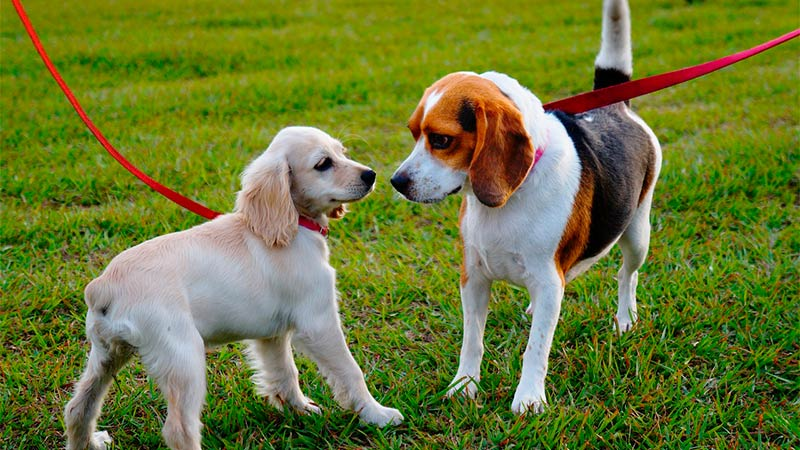 Consejos sencillos para un buen comportamiento de mi perro - TOP aul@ Salud