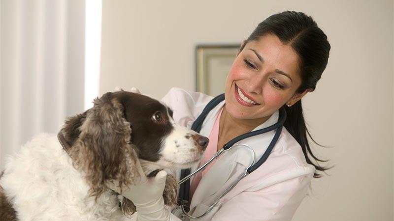 7 beneficios de revisiones periódicas a tu mascota - TOP aul@ Salud