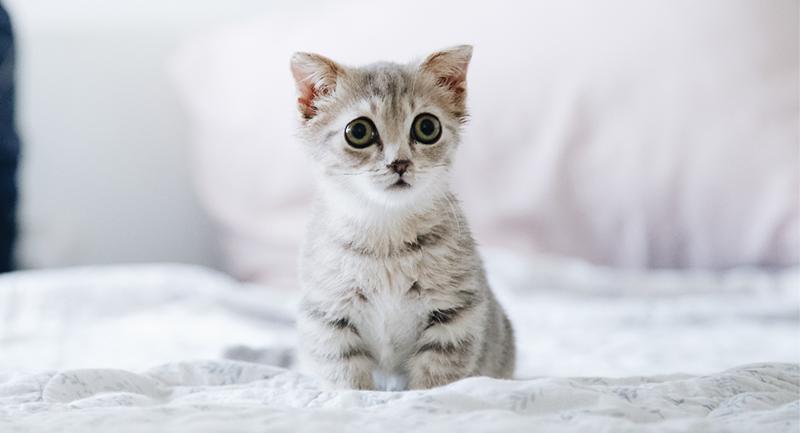 5 Consejos para educar a mi gato - TOP aul@