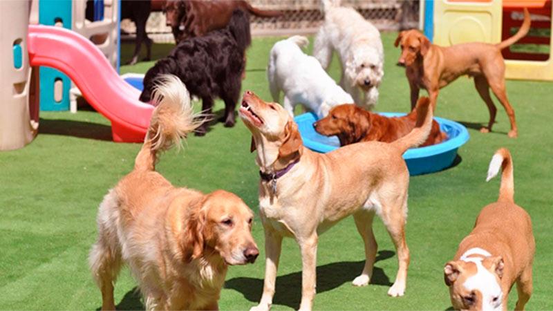 7 tips para elegir la mejor residencia para tu mascota - TOP aul@