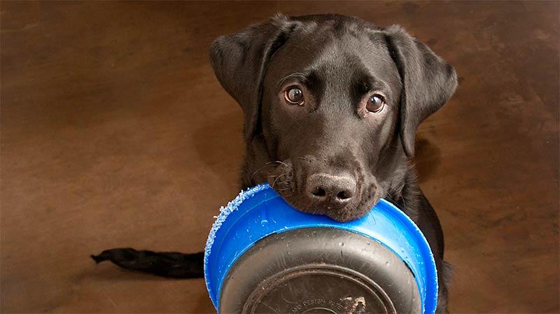 5 consejos para elegir el mejor bol para tu mascota - TOP aul@ Salud
