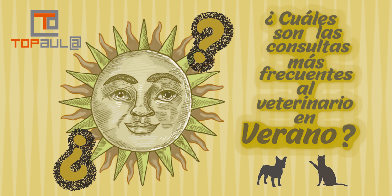 ¿Cuáles son las consultas más frecuentes al veterinario en verano? - www.topaulasalud.com