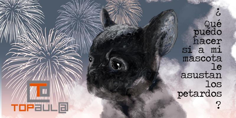 ¿Qué puedo hacer si a mi mascota le asustan los petardos? - www.topaulasalud.com