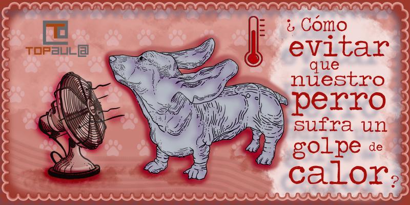 ¿Cómo evitar que nuestro perro sufra un golpe de calor? - www.topaulasalud.com