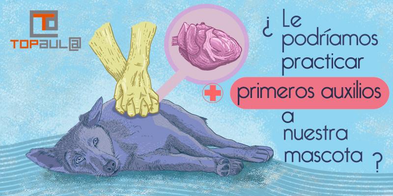 ¿Le podríamos practicar primeros auxilios a nuestra mascota? - www.topaulasalud.com