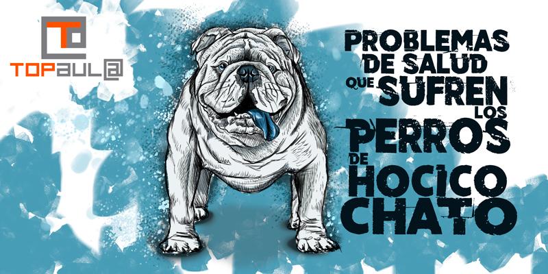 Problemas de salud que sufren los perros de hocico chato - www.topaulasalud.com
