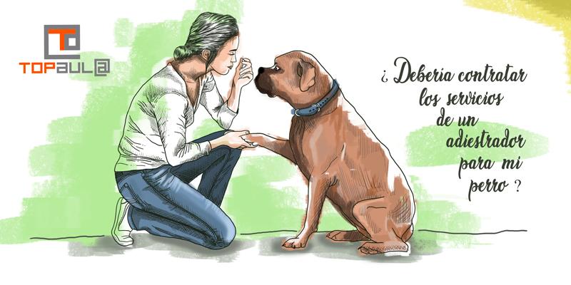 ¿Debería contratar los servicios de un adiestrador para mi perro? - www.topaula.com