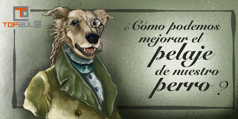 ¿Cómo podemos mejorar el pelaje de nuestro perro? - www.topaulasalud.com