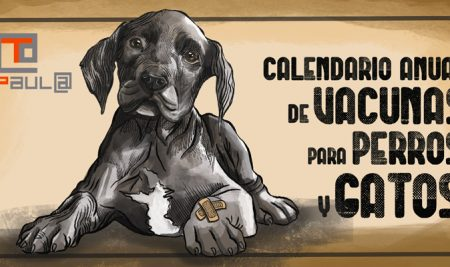 Calendario anual de vacunas para perros y gatos