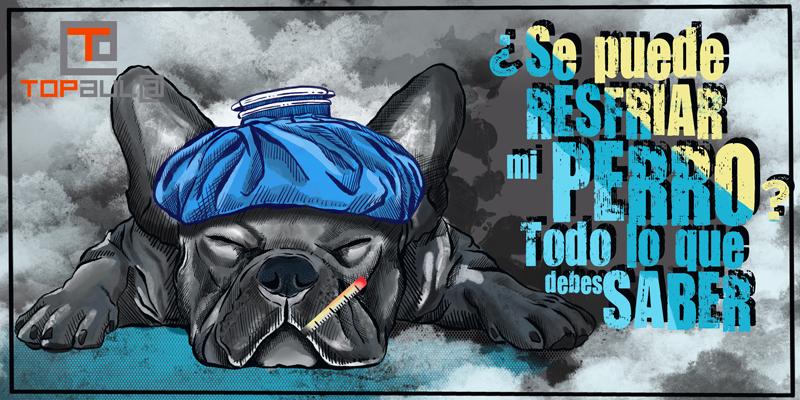 ¿Se puede resfriar mi perro? Todo lo que debes saber - www.topaula.com